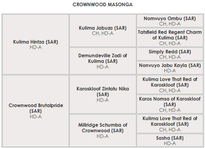 ped Crownwood Masonga