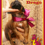 mr-drago1