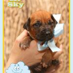 mr-sky