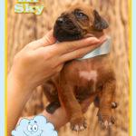 mr-sky2