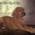 king-of-ring2